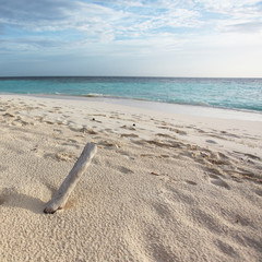 Wood in the sand - Malediven - Holz im Sand - Maldives