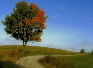 lone tree by the road