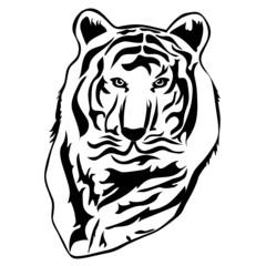 Tiger illustration in black color, vector illustration