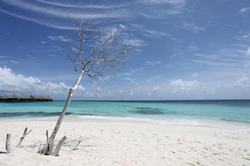 Baum - Malediven - Tree - Maldives