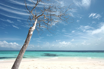 Paradies - Malediven - Paradise - Maldives
