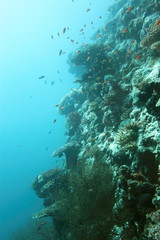 Riff - Malediven - Reef - Maldives