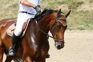 Horse on race