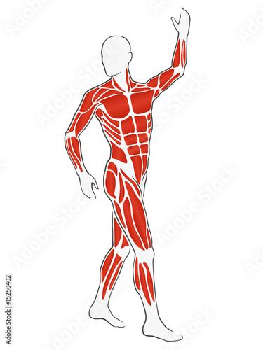 illustration - männlicher körper mit muskeln\