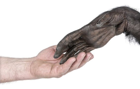 handshake between Human hand and monkey hand