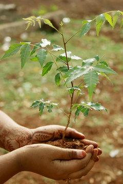 Neem Plant in hands