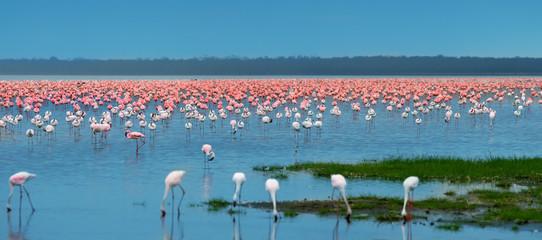 flocks of flamingo Wall mural