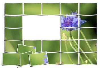 composicion fotos flor azul