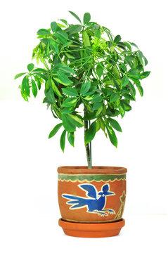 Pflanze in Blumentopf