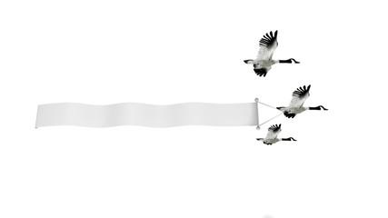 oiseaux publicitaires