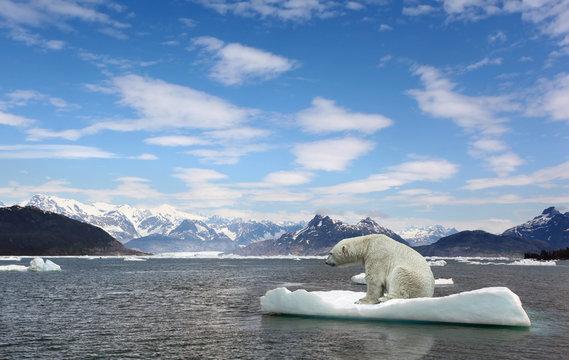 Polar bear and golbar warming