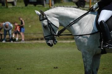 horse parade in Poland