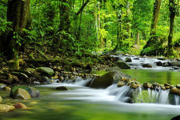 Printed kitchen splashbacks Forest river Mountain stream