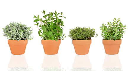 Lavender, Mint, Thyme and Oregano Herbs