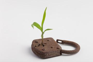 lock plant