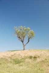 albero 3
