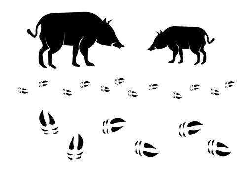 Wildschwein mit Spur