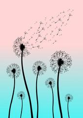 Blume als Silhouette