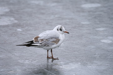 Ein Vogel auf dem Eis