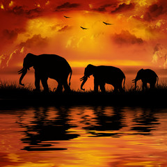 In de dag Baksteen Elephants on a beautiful sunset background