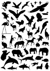 collection of animal vector 2