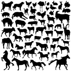 collection of farm animal vector