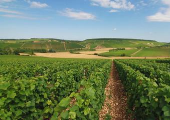 Le vignoble Aubois à Gyé sur Seine