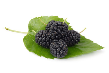 Mulberry 3
