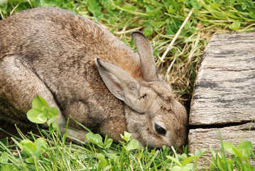 rabbit by den entrance