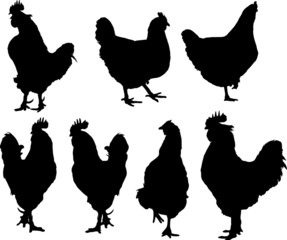 vector silhouette of group hens and roosters