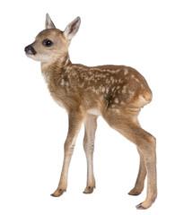Deurstickers Ree roe deer Fawn - Capreolus capreolus (15 days old)