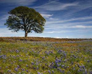 California Springtime