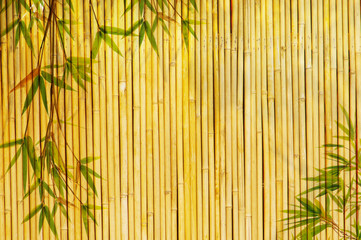 Wall Mural - frame of bamboo-leaves background.