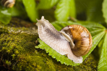 Snail - a slow animal that is covered by a shell