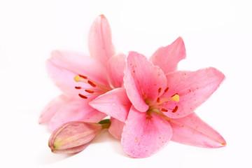 Blume,lilie