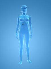 weiblicher körper mit gallenblase