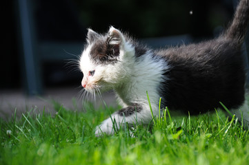 Katzenbaby schleicht durchs Grad II