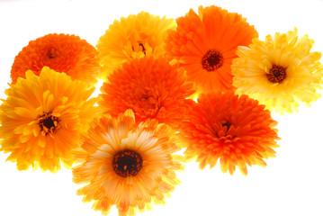 yellow and orange flwers on light box