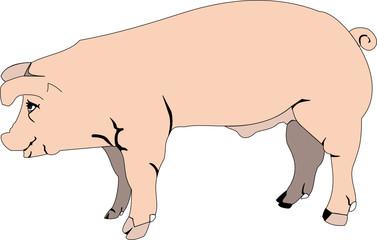 pink pig, beautiful vector