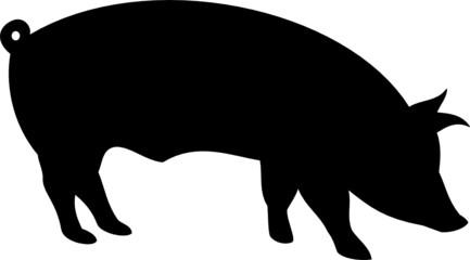 silhouette pig