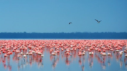 Foto op Plexiglas Flamingo flocks of flamingo