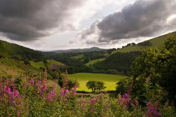 Welsh Vista View