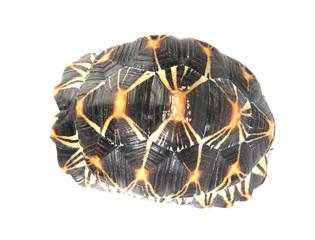 macro studio photo of a tortoise shell top view