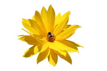 Biene bei der Ernte