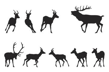 red deer running