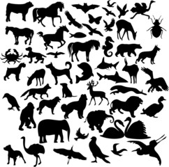Animal collage 3 (vector)