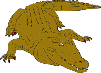 vector - crocodile isolated on background