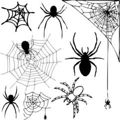 Spider Collage