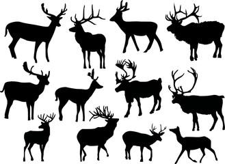 twelve isolated deers