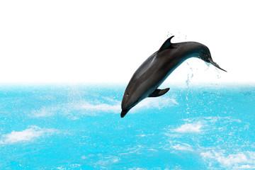 Photo sur Aluminium Dauphins Jumping Dolphin